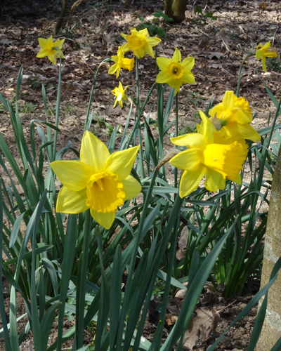 avril et son fil se découvre - Page 3 Narcis11