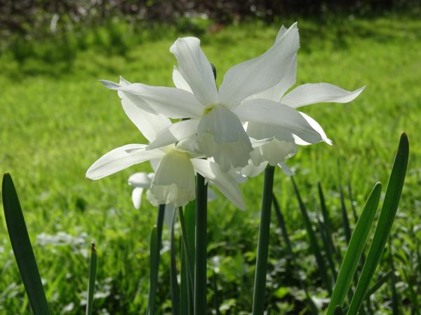 avril et son fil se découvre - Page 3 Narcis12