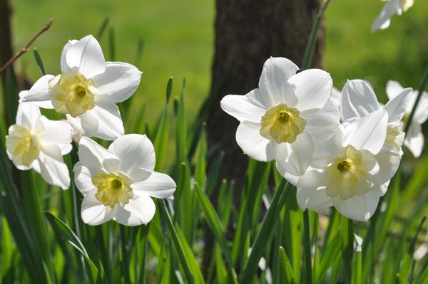 avril et son fil se découvre - Page 6 Narcis13