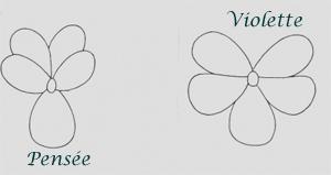 Viola - comment les différencier Violet11