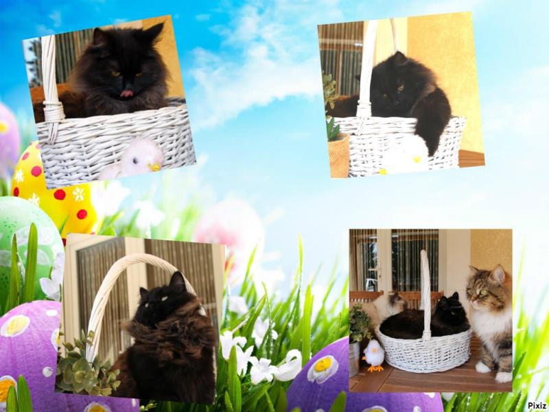 concours Photos.... Le chat et Pâques Pixiz_12