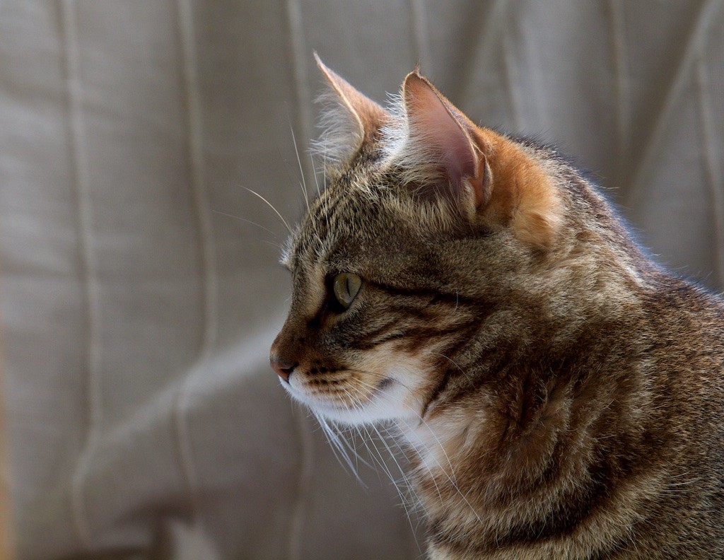 Katz cat  chat Atzk10