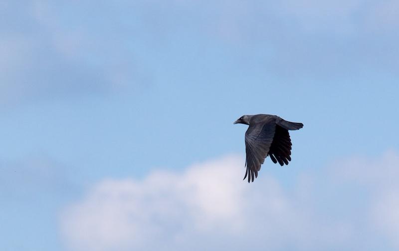 çà vole en 29 Bird10