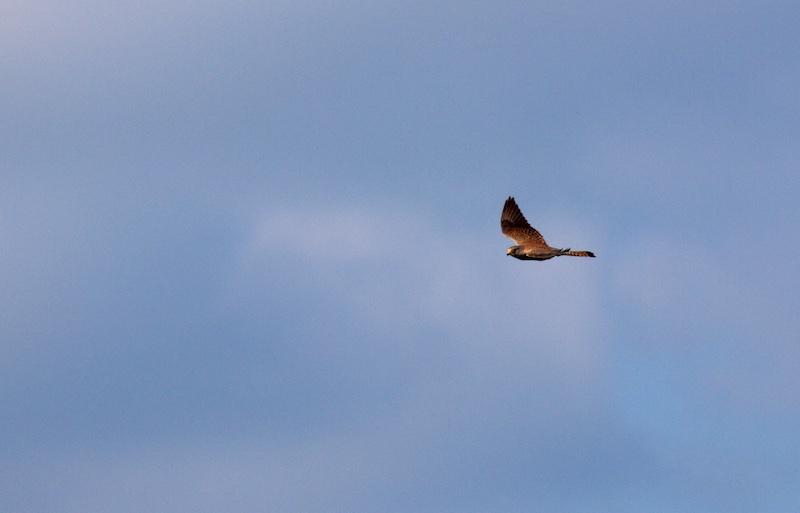çà vole en 29 Bird_210