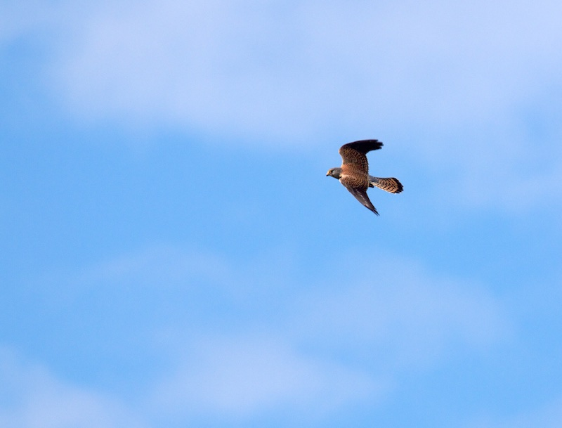 çà vole en 29 Bird_310