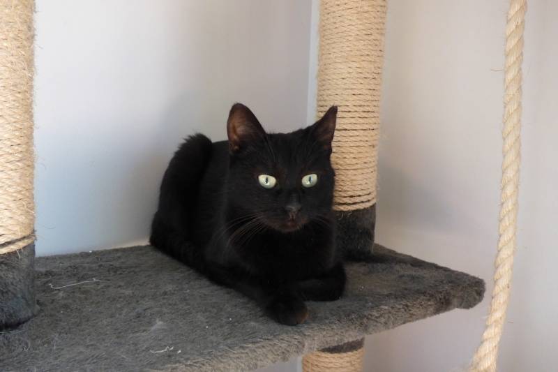 Jenga, femelle type européenne noire estimée née 15/10/2014 P1000910