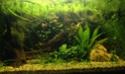 Aquarium Low tech - 126 litres - Page 2 Fullsi11
