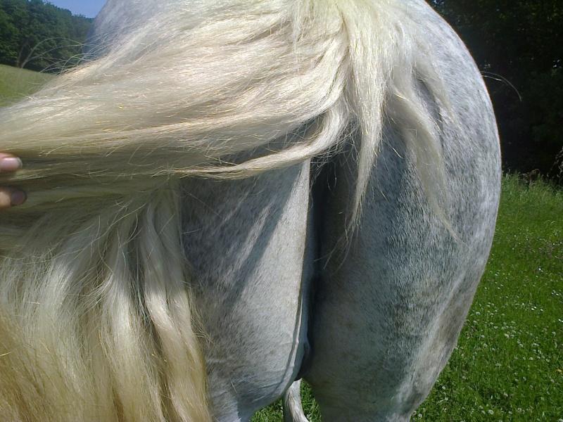 Dessiner vos chevaux - Page 2 Photo018