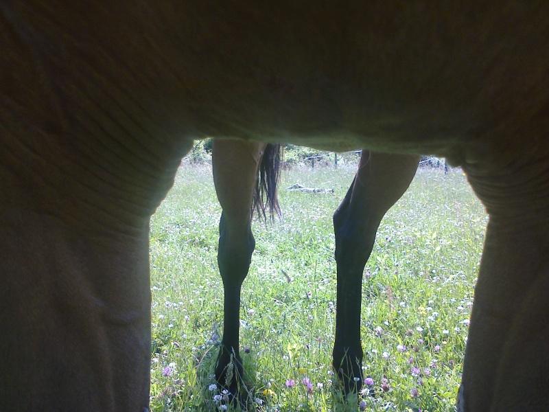 Dessiner vos chevaux - Page 2 Photo019