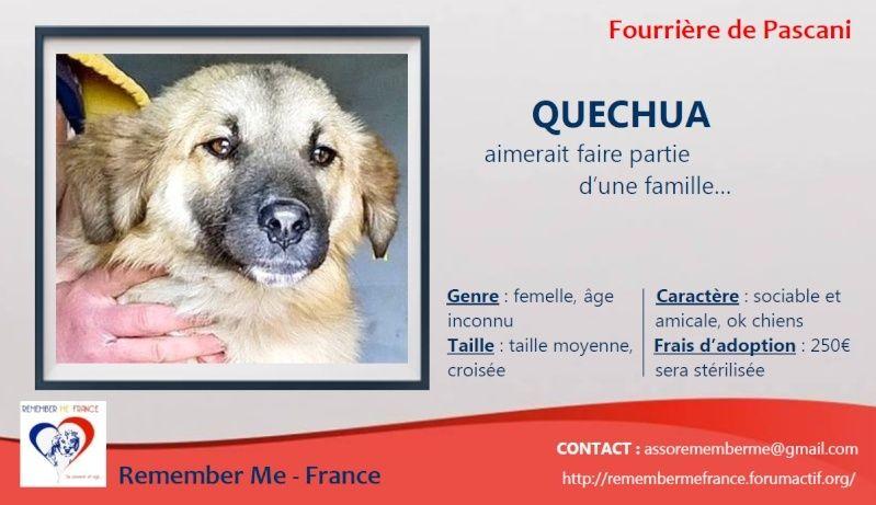 QUECHUA - chiot femelle, taille moyenne née en juillet 2014 (Pascani) - adoptée par Corinne (dpt 94) Quechu10