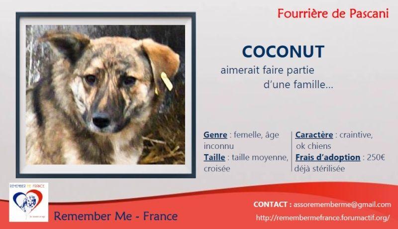COCONUT - femelle croisée de taille moyenne - adoptée par Régine (Belgique) Visuel15