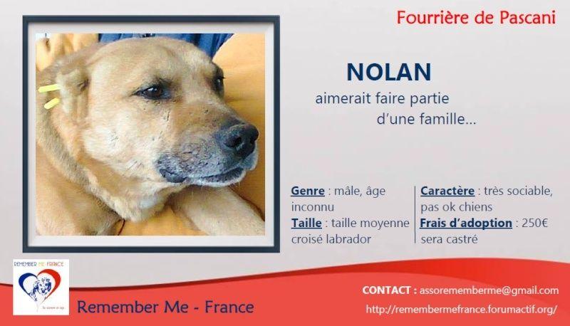 ** NOLAN ** - Mâle taille moyenne très sociable né en 2008 - ( PASCANI ) - adopté par Nadine (Belgique) - DECEDE  Visuel30