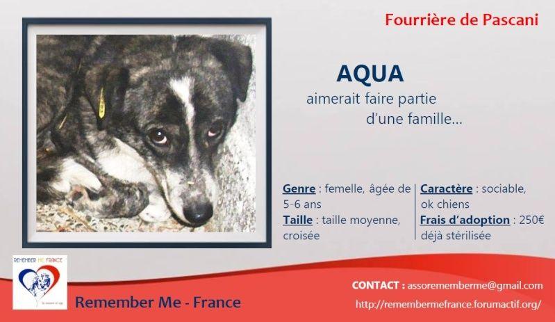 florin - AQUA - femelle croisée, taille moyenne (PASCANI)- CHEZ FLORIN -  adoptée par Sonia et Aurélie (dpt 67) Visuel46