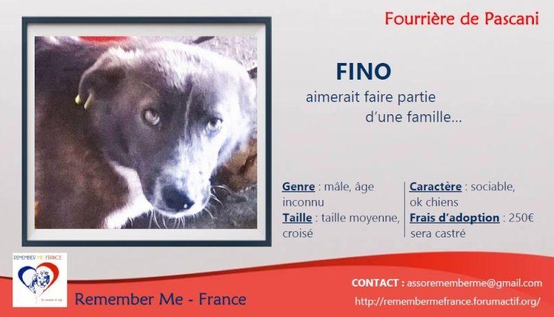FINO - mâle croisé, taille moyenne né env 2014 (Pascani) - adopté par Laura (dpt 30) Visuel69