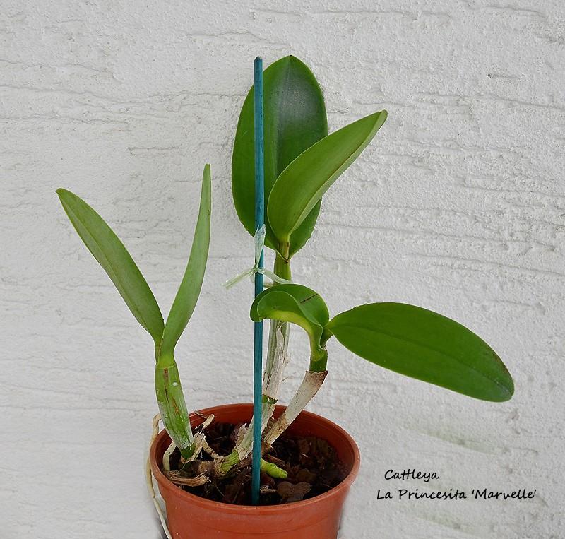 Orchideen-Neuzugang - Seite 5 Dsc_9211