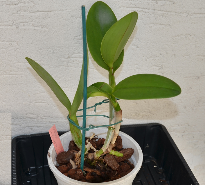 Orchideen-Neuzugang - Seite 5 Dsc_9212