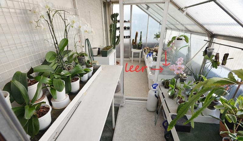 Orchideen-Neuzugang - Seite 4 Gwh-le10