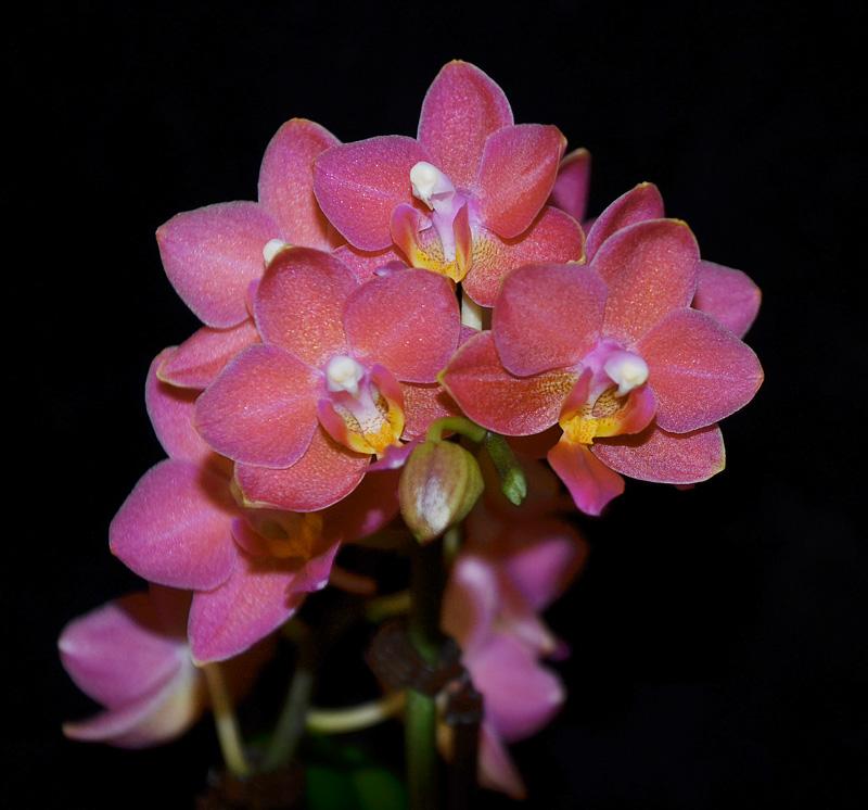 Orchideen-Neuzugang - Seite 4 Neu210