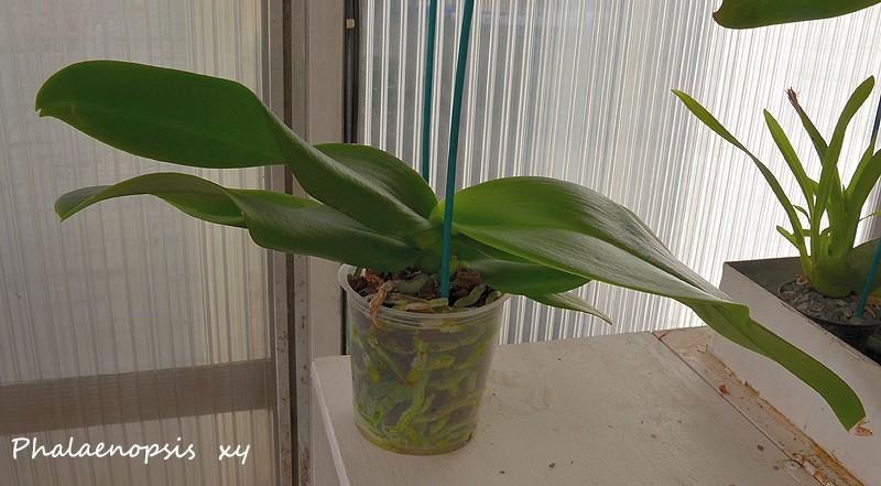 Orchideen-Neuzugang - Seite 3 Ueberr10