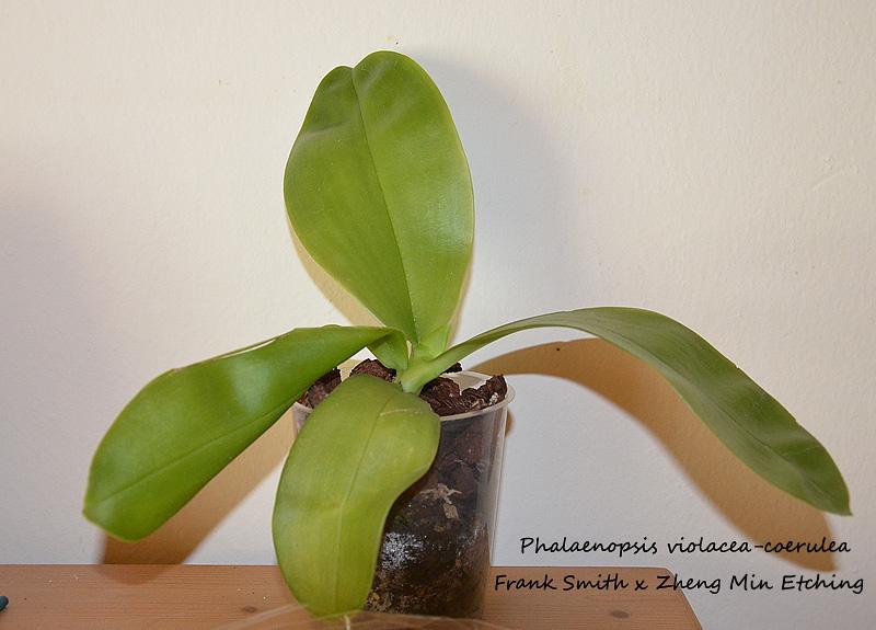 Orchideen-Neuzugang - Seite 4 Uebers10