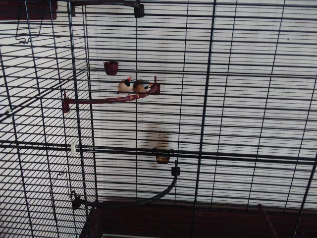 cage et voliere Cage2_11