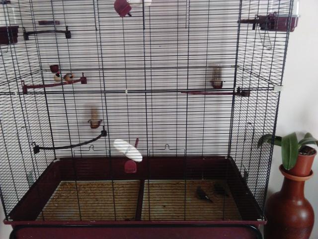 cage et voliere Cage2_12