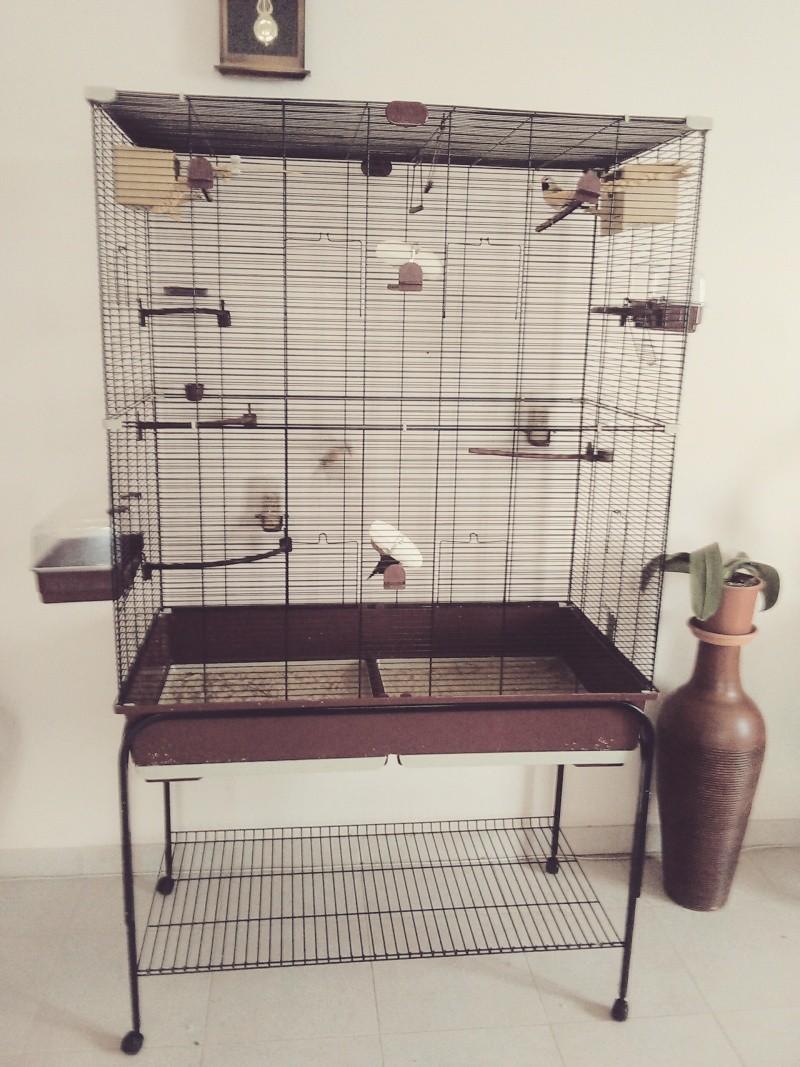 cage et voliere Cage_011