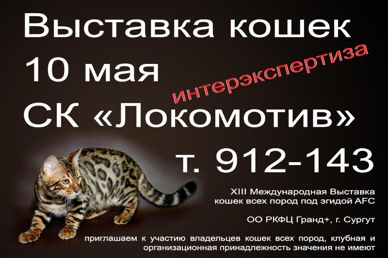 """Международная выставка кошек AFC """"Удивительные кошки"""", 10 мая 2015, Сургут (Россия) Ee_iae10"""