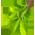 arbre* - Arbre Saule => Branche de Saule Curlyw11