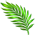 Palmier de Pâques Palmle13
