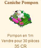 Caniches Carnaval / Caniches Carnaval => Pompon Sans_322