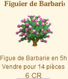 Figuier de Barbarie => Figue de Barbarie Sans_369