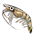 Jabiru d'Asie / Cigogne => Plume de Cigogne Shrimp11