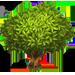 Vous cherchez un arbre ? Venez cliquer ici !!! Teatre10