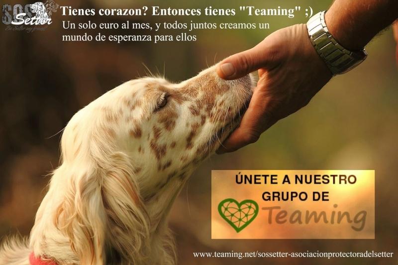Teaming für SOS Setter Spanien Image16