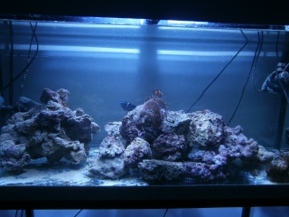 Mon 160 fish only P4300010