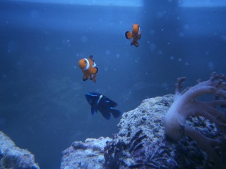 Mon 160 fish only P4300011