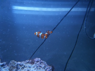 Mon 160 fish only P4300012