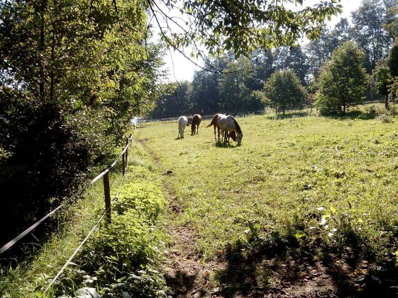 Pension pré à côté de Chambéry Img_2011
