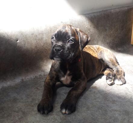 Lexy (Adoptée) Lexy2-11