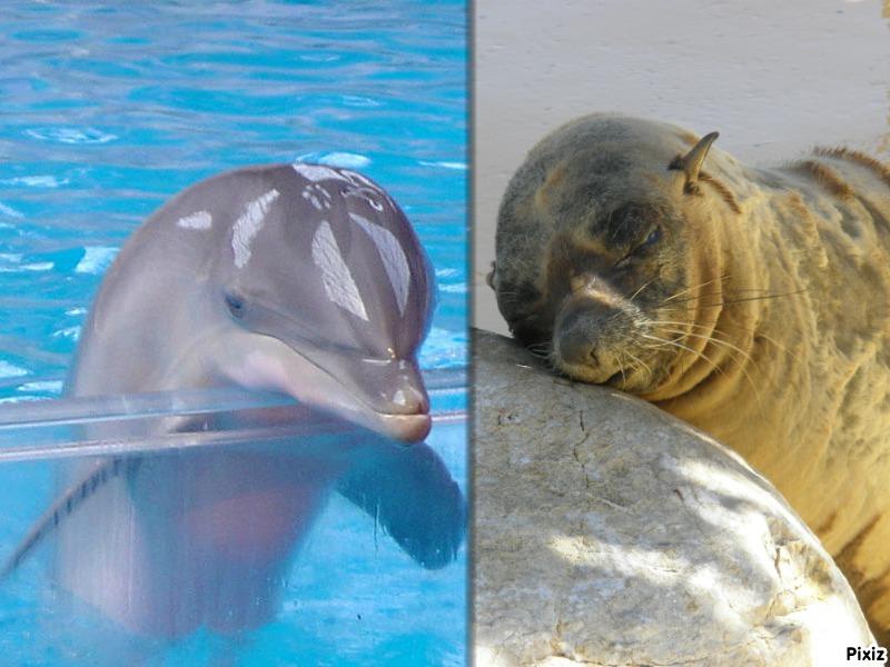 [Photo]Besoin d'aide pour identifié un dauphin, une otarie ? Pixiz-10