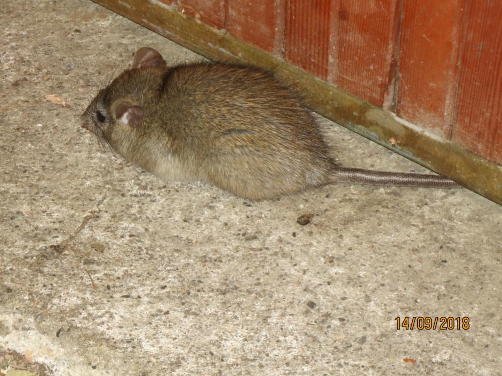 Quel est cet animal ? Img_5310