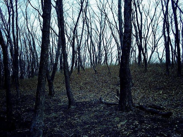 OAKEN FOREST Oakenf10
