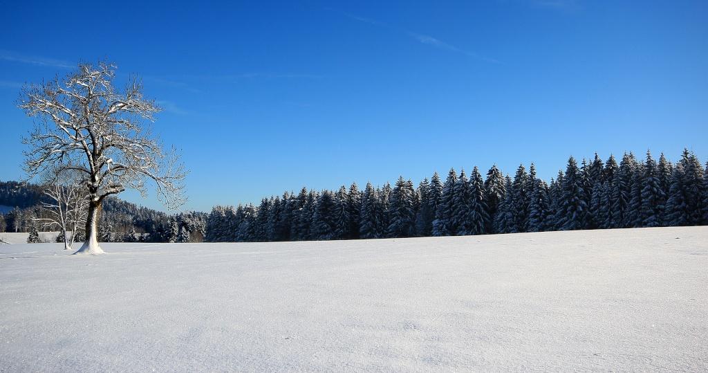 back en hiver Img_7912