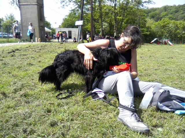 LOOPING - x epagneul 16 ans (10 ans de refuge) - Sos Animaux à Moineville (54) P10-0512