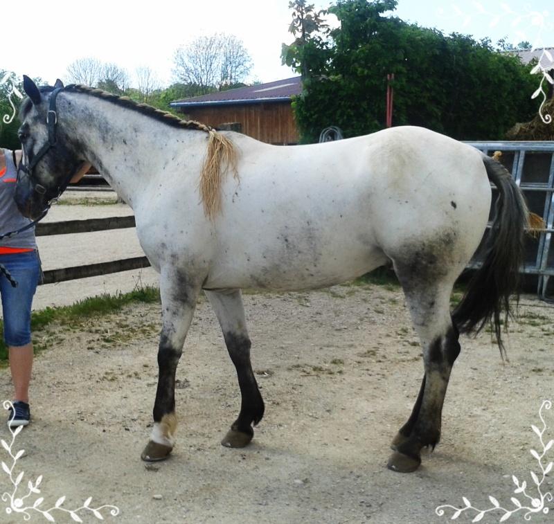 CONCOURS PHOTOS : Le cheval toiletté 20140510