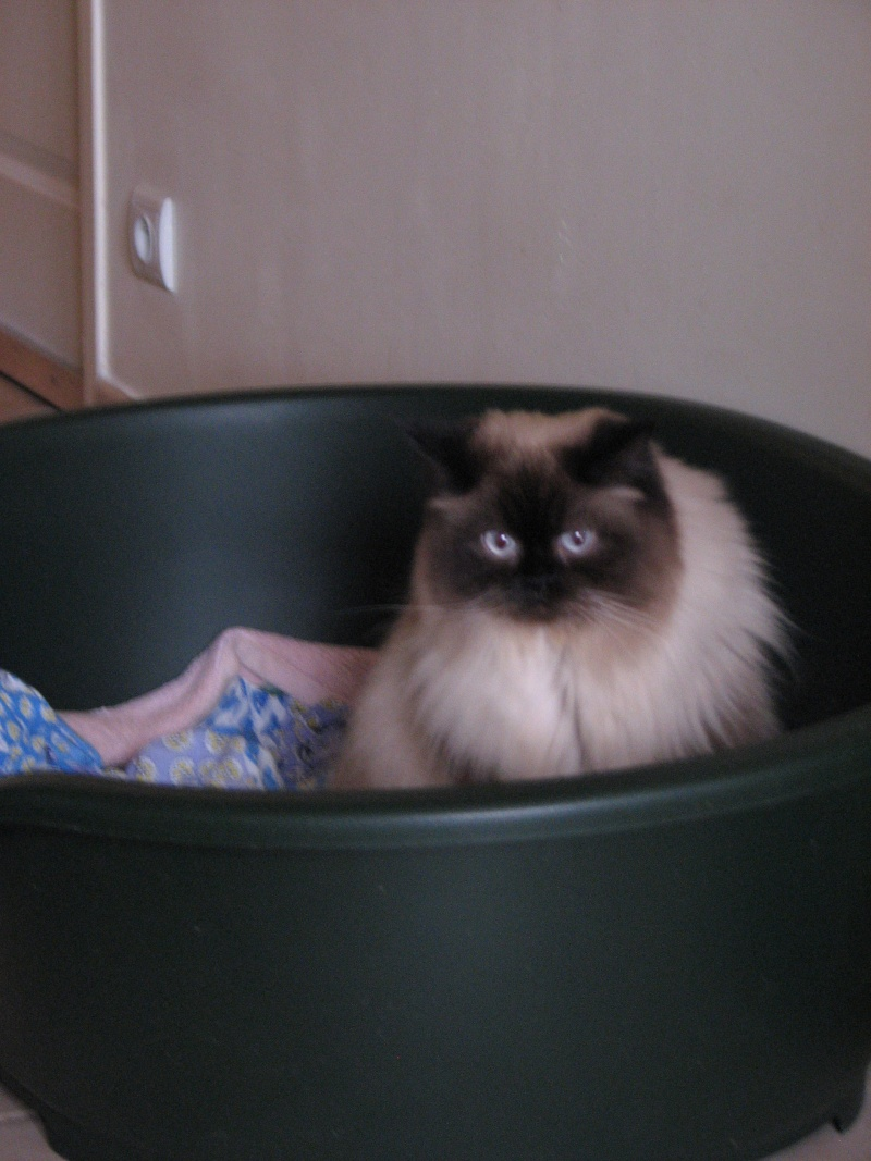 Help pour HARIBO le chat! 2013_m10