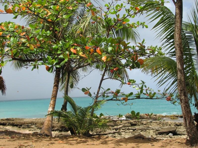 soleil des Antilles 2015_m11