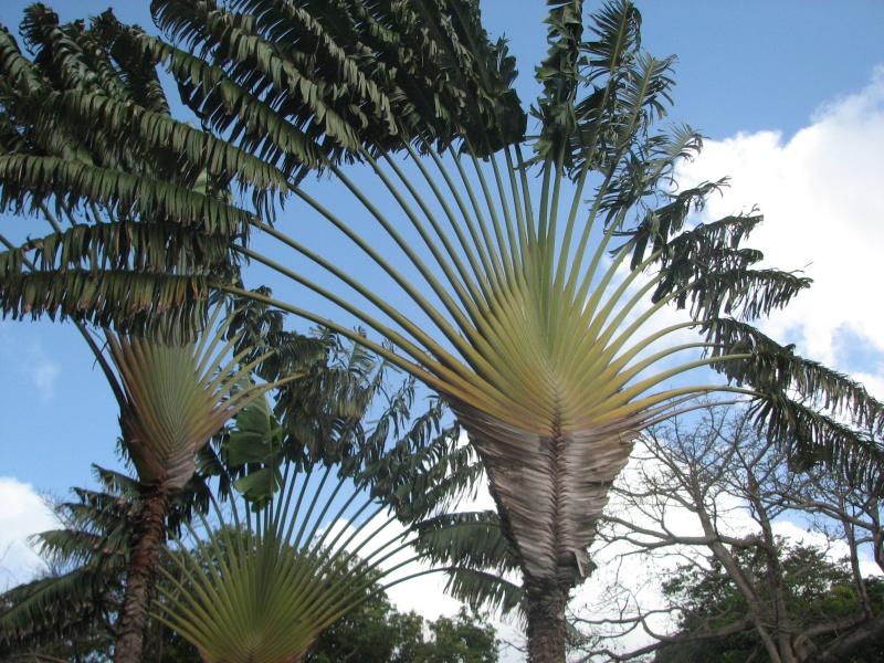 soleil des Antilles 2015_m13