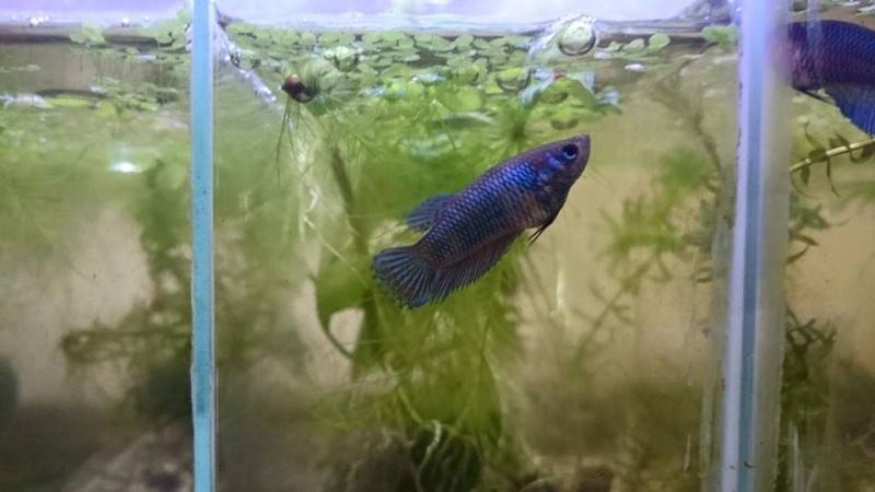 les petits de mon deuxieme frais F_blue11
